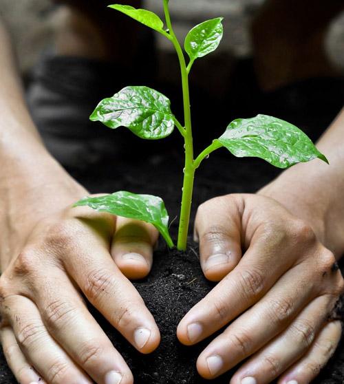Asesoría de Atributos de Sustentabilidad